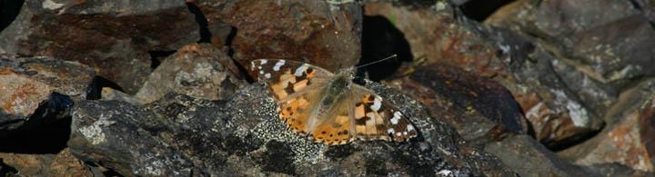 Náttúra - Hausmynd
